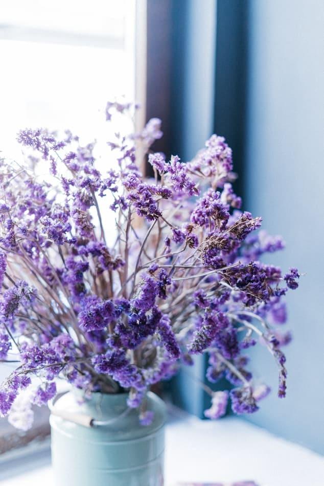 Lavande, plante d'intérieur. | Source : Unsplash