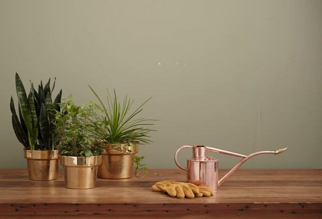 Plante d'intérieur en pot. | Source : Unsplash