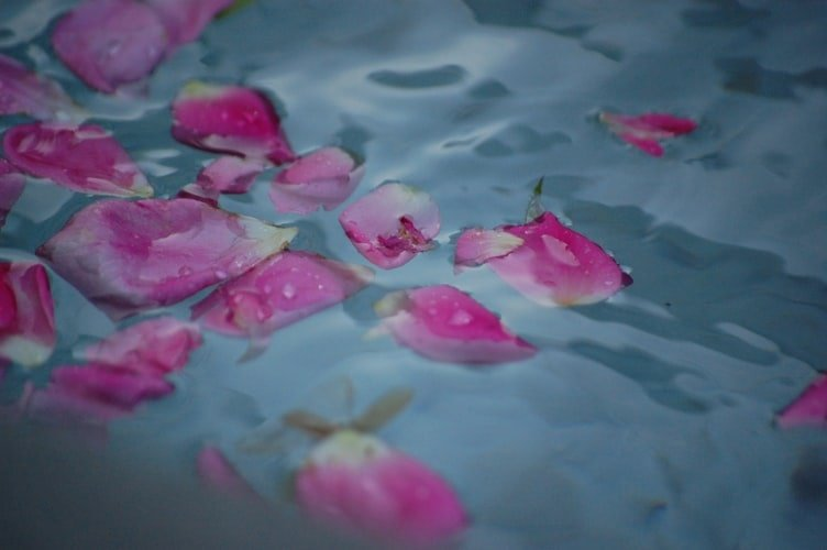 Pétales de roses dans l'eau. | Photo : Unsplash